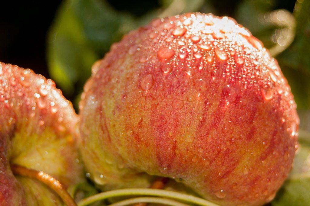 Ett äpple om dagen